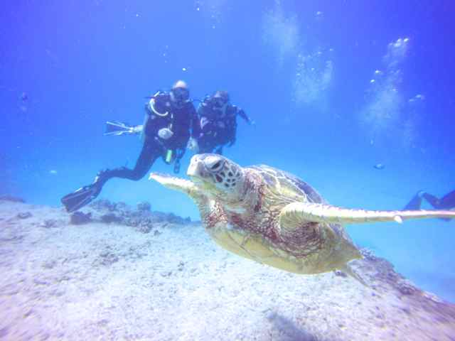 Huge Sea Turtle at Turtle Canyon