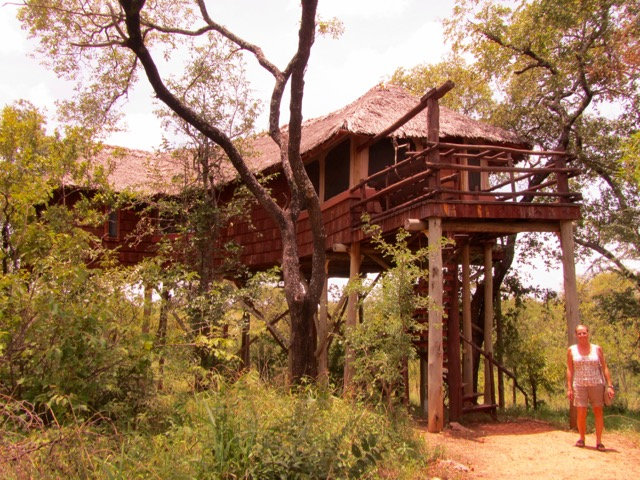 Tree Top Lodge