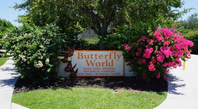 Butterfly World, more than just butterflies!