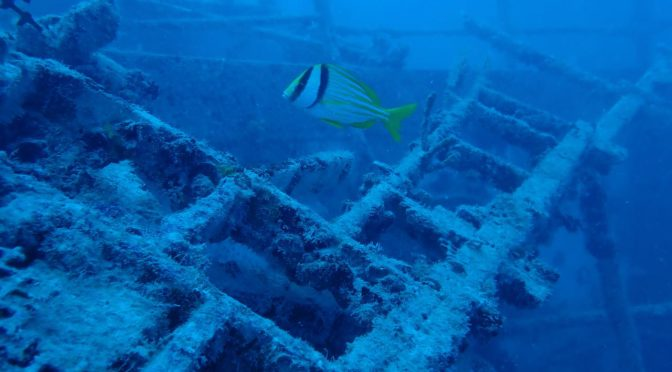 Diving the 2nd and 3rd largest artificial reefs in the world