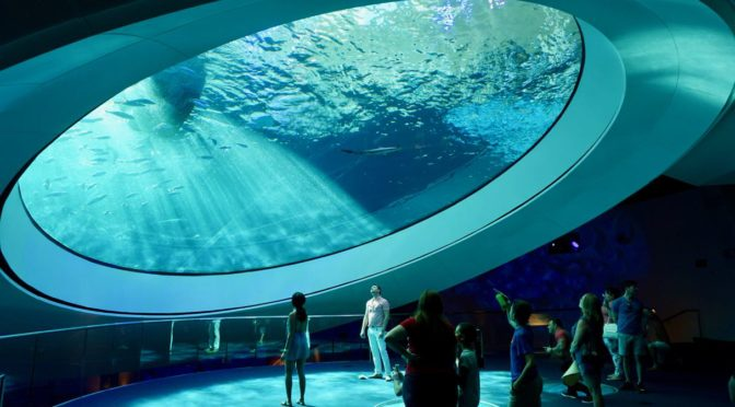 Diving into the Gulf Stream at the Frost Museum of Science