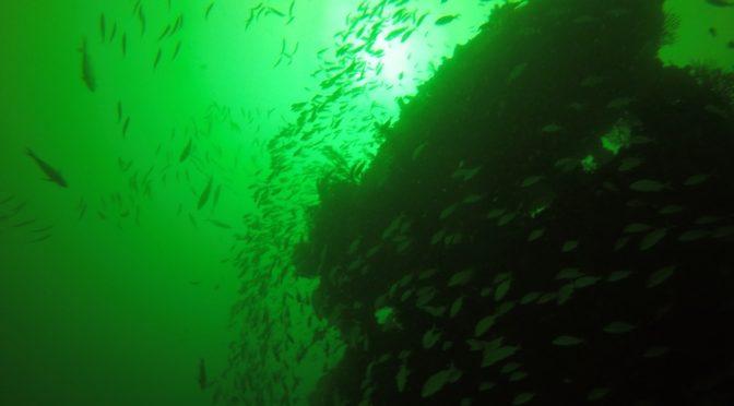 Scuba diving break