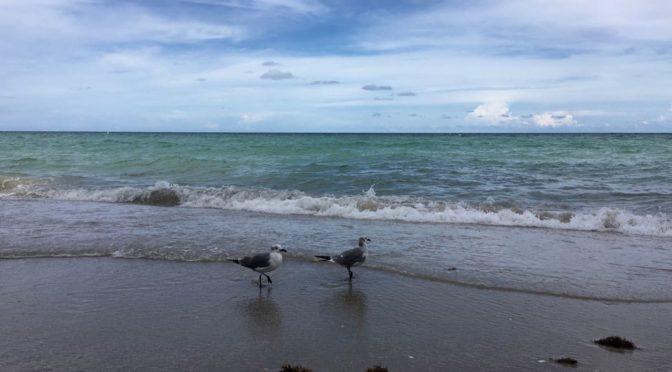 N.A.T. | Beach cleanup initiative