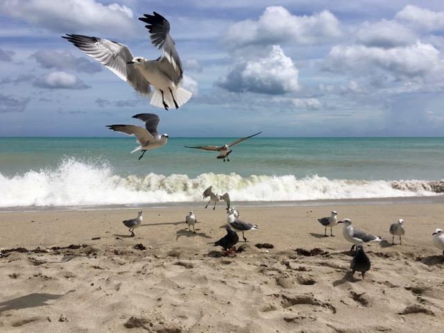 seagulls jumping