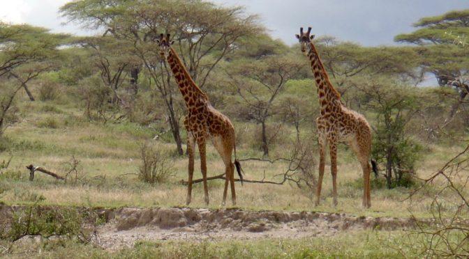 On safari, a dream come true!