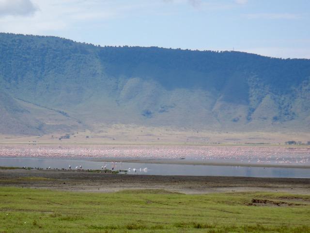Pink Flamingo Ngorongoro