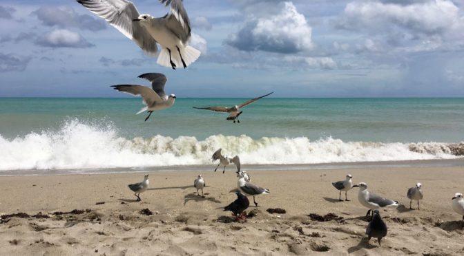 N.A.T.|Post hurricane beach cleanup
