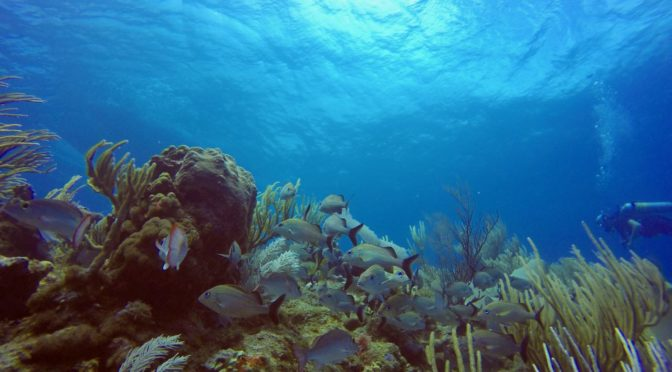 Diving Grand Cayman's East End