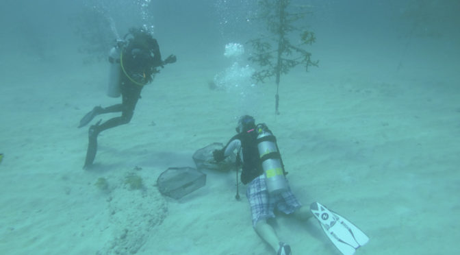 Volunteer diving with Rescue a Reef
