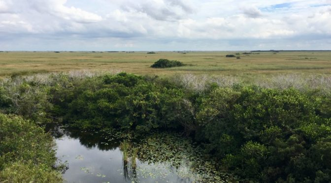 Visiting the Everglades National Park